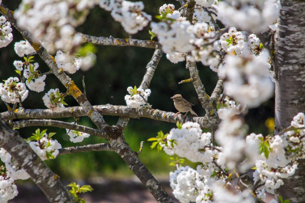 Oiseau sur une branche fleurie